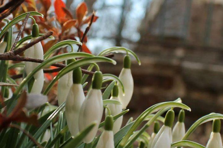 Spring garden at Govans